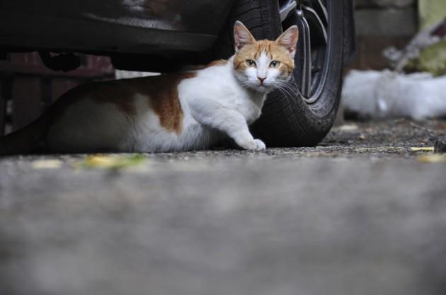 Кошкам легко попасть в моторный отсек Калины-2