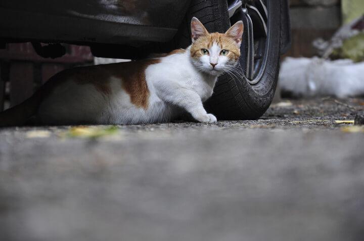 Ради кошек менять конструкцию «Калины-2» не будут